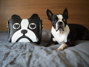dog-shaped products. Merchandise that looks like Boston Terriers